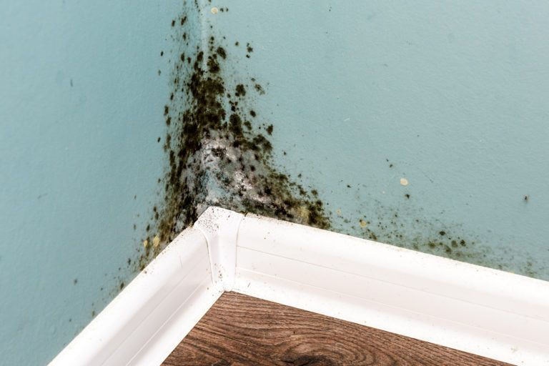 Since Mold Can Grow On Nearly Any Surface So Long As There Is Enough Moisture It Important That You Are Able To Detect Before Spreads And Affects