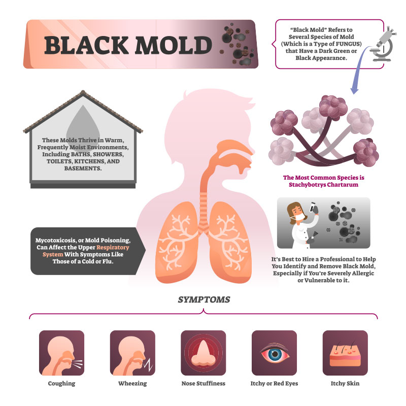 Black mold diagram