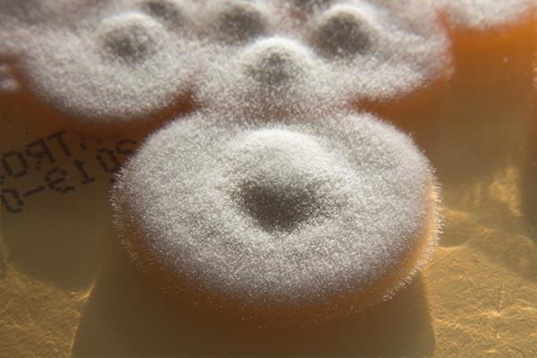Acremonium types of mold